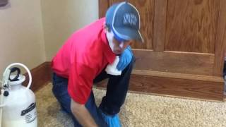 Carpet Cleaning   Stain Removal   Candy Stain